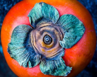 persimmon, 8x10 fine art color photograph