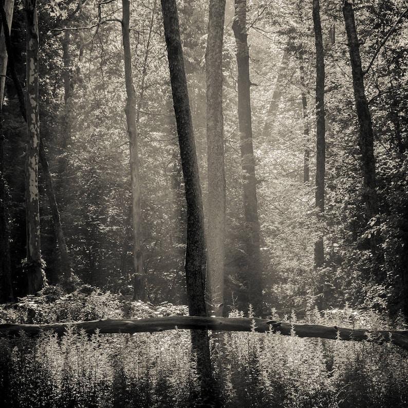 morning light2 8x10 fine art black & white photograph nature image 0