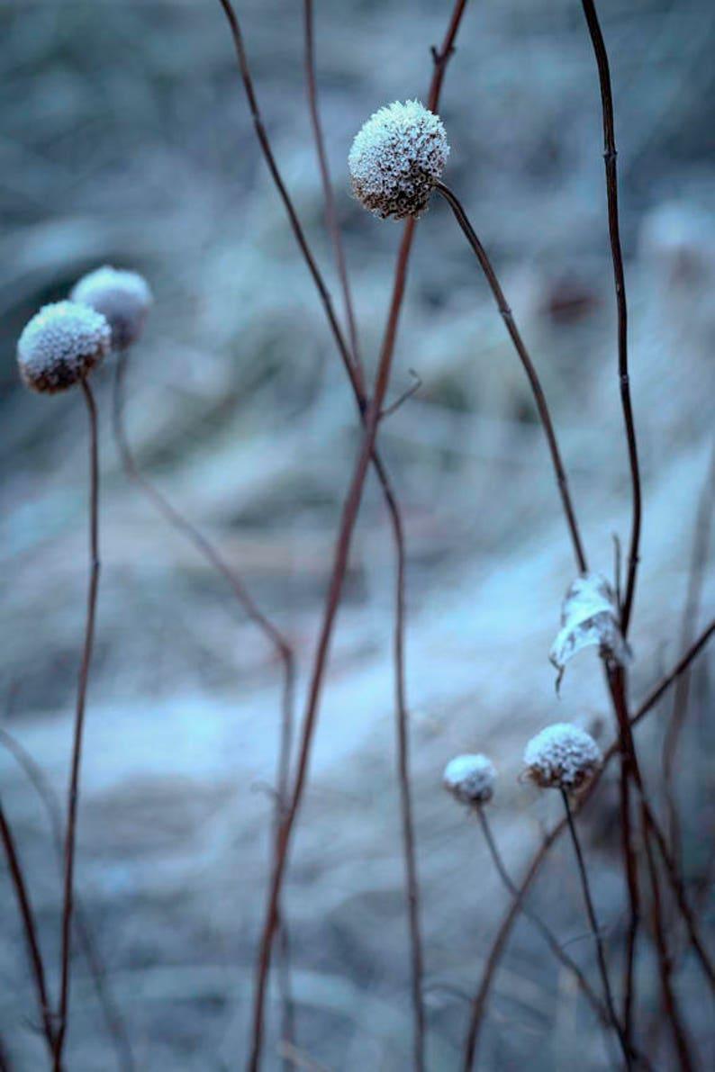 Winter blues 8x10 fine art color photograph image 0