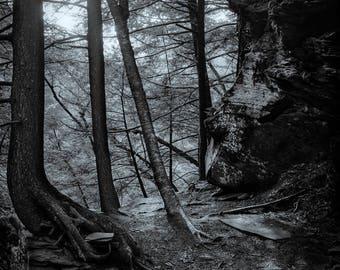 forgotten forest, 8x10 fine art black & white photograph, nature