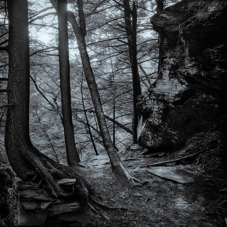 forgotten forest 8x10 fine art black & white photograph image 0