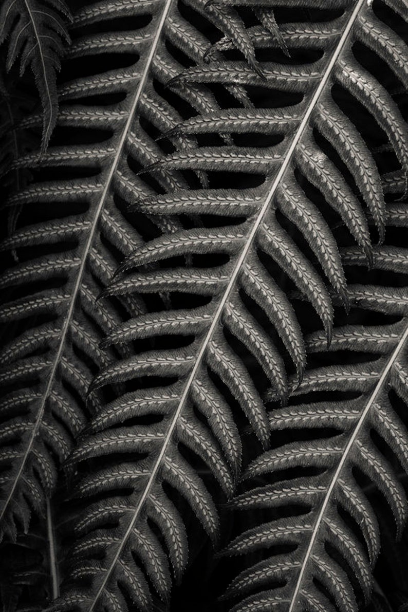 San Francisco fern 8x10 fine art black & white photograph image 0