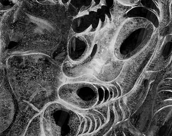 ice dragon, 8x10 fine art black & white photograph, nature