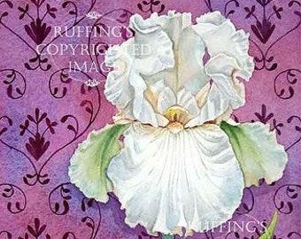 Pink Iris Floral Art Nouveau Wallpaper Pattern Giclee Fine Art Print, Signed Elizabeth Ruffing, on 8.5 x 11 inch art paper