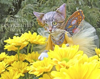 Celeste the Pixie Kitten, 6x8 on 8x10 Giclee Photo Print, Yellow Chrysanthemums, Signed Max Bailey and Elizabeth Ruffing, Version 3