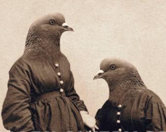 Pigeon Sister Unusual Portrait 5 x 7 Inch Oddities Bird Art Print