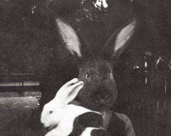 8 x 10 Inch Anthropomorphic Mixed Media Black Rabbit Collage Art Print of Boy Holding White Bunny