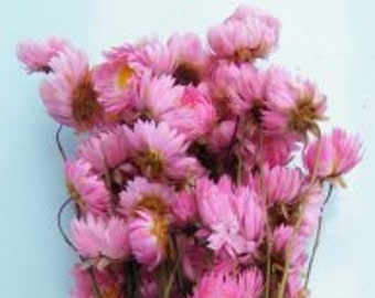 Pink Dried Flowers Etsy