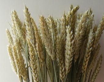Wheat bunch | Dried wheat stems | Dried grasses British grown