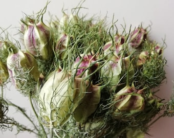 Nigella Pods bunch | Dried seed pods | Love in a mist pods natural green | British dried flowers