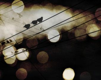 Birds on a Wire Photograph, Modern Abstract Circles, Sepia Bokeh Sparkles Light, Dark Brown Bokeh 8x10