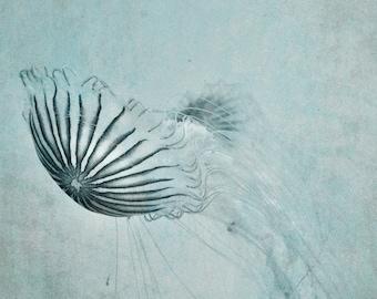 Jellyfish Photograph, Pastel Blue Aqua Grey Print, Blue Gray Nautical Sea Life Wall Art, Underwater Marine Life Jellyfish art 8x10