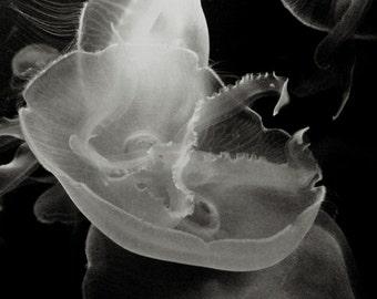 Jellyfish Photograph, Black and White Jellyfish print, Moon jellyfish monochrome photograph, sea life jellyfish picture 8x8 and up