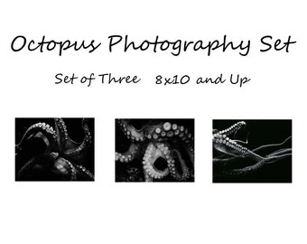 Octopus Photo Set, Set of Three Octopus Prints, Black and White Octopus Photography Set of 3, Mystical, Tentacles, Kraken prints 8x10 and up