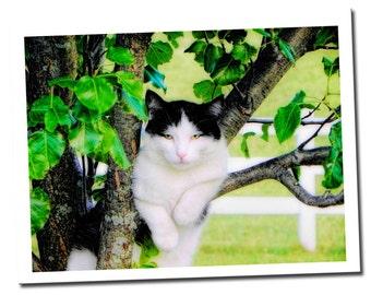 Cat Note Card, Tuxedo Cat Card, Blank, Photo Art Card by Joy DeLisle