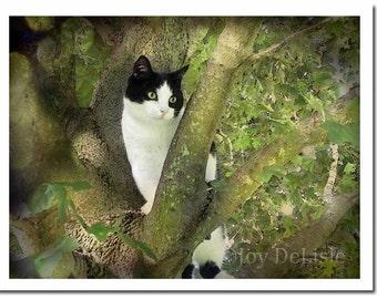 Tuxedo Cat Card, Cat Note Card, Photo Art Card