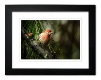 34b435dee4e Framed Limited Edition Finch Themed Wall Art