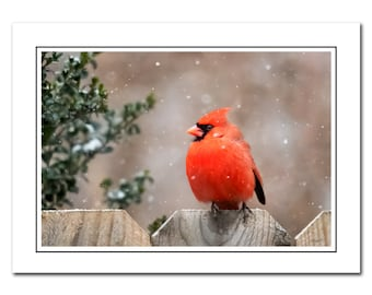 Winter Red Cardinal Photo Note Card Includes Envelope, Snow Bird Photography Card, Blank Greeting Card, Thank You Card, blank note cards