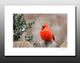 Winter Cardinal Matted Print, Bird Photography, Cubicle and Dorm Wall Art, Stocking Stuffer gifts, Ready for Framing, Fits 5x7 inch Frame