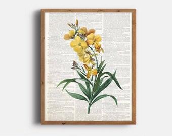 Yellow Botanical Print, Botanical Art, Dictionary Flower Art, Vintage Wallflower Print, Digital File, Instant Download