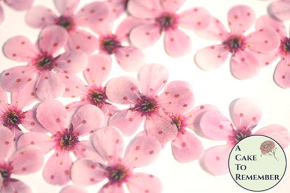 48 wafer paper cherry blossom flowers 1 across edible etsy image 0 mightylinksfo
