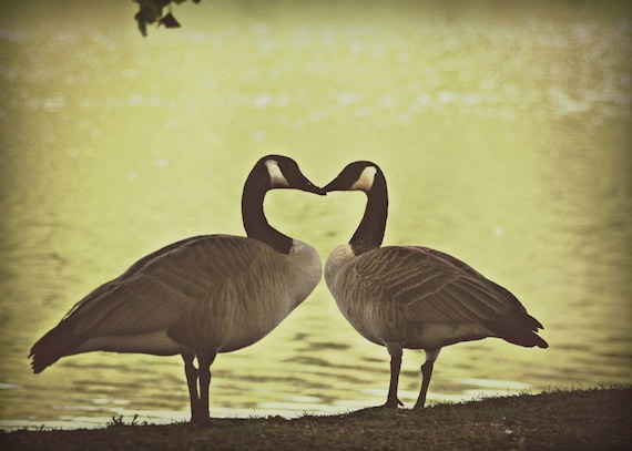 Canadian Wedding Gifts: Items Similar To Canadian Geese Photography Gifts Under 25