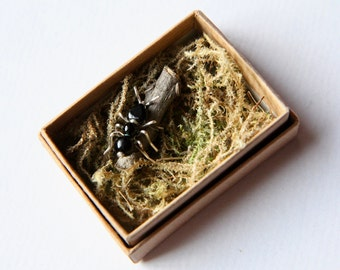 Ant in a box