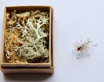 Cricket in a box