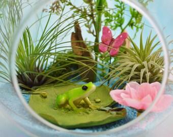 "Frog on Lillypad Terrarium Kit ~ 6"" Medium Air Plant Terrarium Kit ~ Frog lover gift ~ 2 Live Air Plants ~ Miniature Frog ~ Gift Idea"
