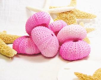 Hot Pink Sea Urchin ~ 1 piece ~ Dyed Pink Sea Urchin Shell ~ Small Urchin