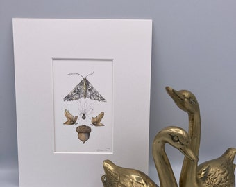 Moth, Acorn, and Seeds Fine Art Print  Matted and Ready to Frame
