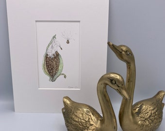 Milkweed Pod and Seeds Fine Art Print  Matted and Ready to Frame