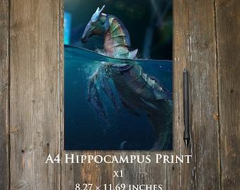 Hippocampus A4 print