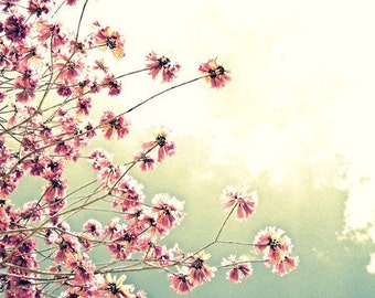 Sky's the Limit - Pink Blossom Tree Photography ART 11x14 Print