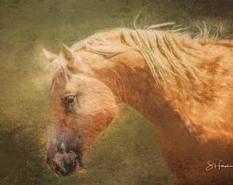 Nick - Painting - Wild Mustang of Sand Wash Basin, Wild Horse Painting, sand wash basin wild horses, Colorado stallion