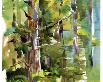 Redwoods, California : print of a watercolor sketch