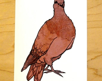Red Pigeon- Mini Archival Print