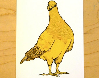 Orange Pigeon- Mini Archival Print
