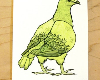Green Pigeon- Mini Archival Print