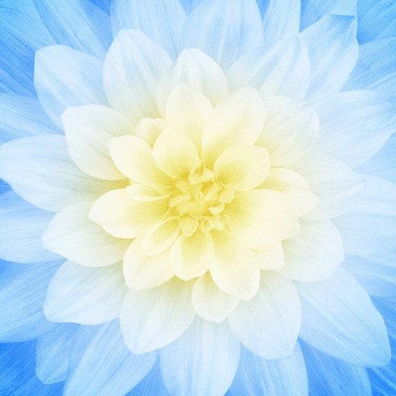 French Blue 43 x 43 Digital Floral Panel Cotton Fabric by Hoffm Dream Big