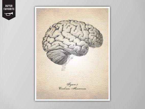 Menschliche Gehirn Kunstdruck Gehirn Illustration Kunstdruck | Etsy
