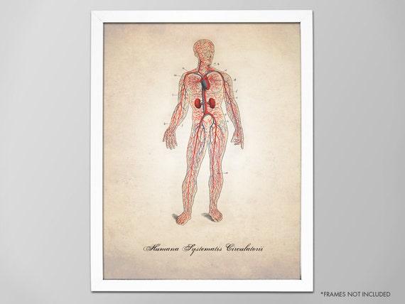 Herz-Kreislauf-System Kunstdruck menschliche Anatomie Venen | Etsy