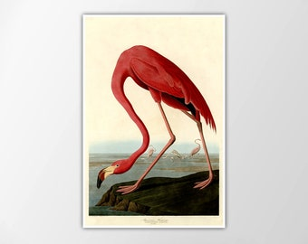 FLAMINGO Art Print Audubon Flamingo Bird Print Vintage Flamingo Reproduction Birds of America John James Audubon Illustration Flamingo Print
