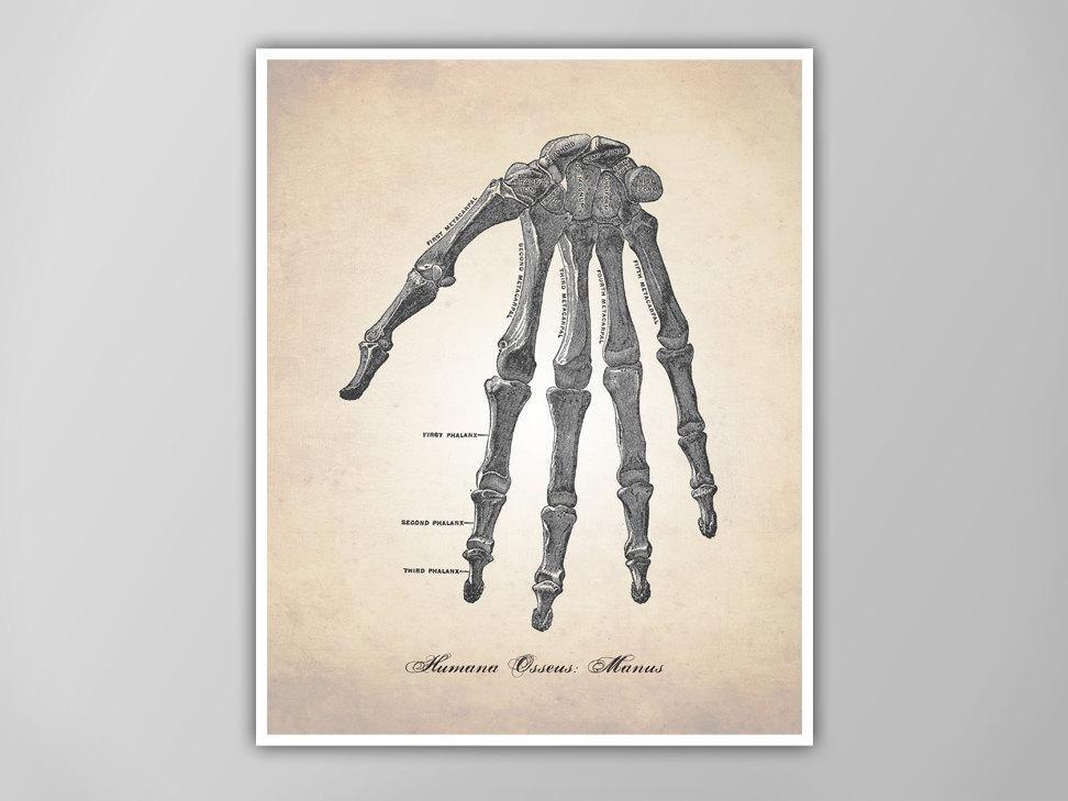 Human Anatomy Hand Art Print Human Hand Poster Human Anatomy Etsy
