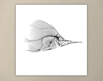 Black and White Fish X-Ray Print, Marine Life Art, Modern Art Print, Square Print, Home Decor, Minimalist Art Print, Custom Sizes Available