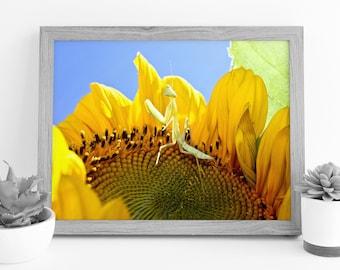 Sunflower Photograph - Praying Mantis Print - Insect Photography - Digital Photography - Photography Download - Photograph Digital Print