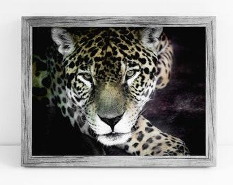 Leopard Photograph - Big Cat Photography - Hunter - Leopard Digital Print - Oakland Zoo - Digital Print