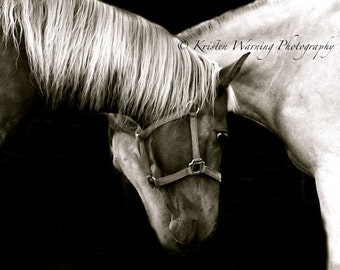 Horse Photos, Horses, Fast Friends, Horse Pictures, Horses, Rocky Mountain, Black and White, Equine Art, Fine Art