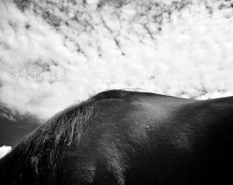 Horse Photo, Horse Pictures, Black and White, Print, Horses, Withers, Equine Art, Horse Photograph