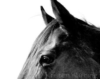 Horse Photo, 8x8 Print, Horses, Black and White, Equine Art, Horse Photograph